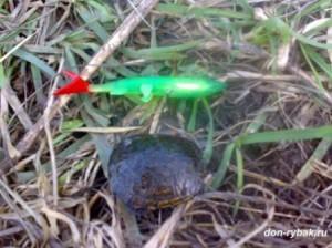 донская черепаха