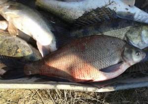 какая рыба клюет в начале августа
