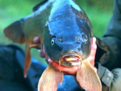 прикормки для хищной рыбы форум