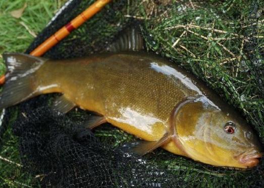 прикормка для мирной рыбы осенью