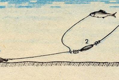 щука на живца с берега летом